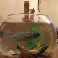 Конспект интегрированной НОД в подготовительной к школе группе «Красивые рыбки в аквариуме»