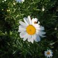 Фотоэкскурсия «Цветы в моем саду»