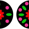 Конспект НОД по аппликации в старшей группе «Декоративная тарелка»