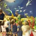 Конспект интегрированного занятия во второй младшей группе «Экскурсия в океанариум»