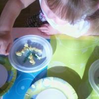 Фотоотчёт об ООД по аппликации на одноразовой тарелке в младшей группе на тему «Мимоза»