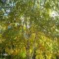 Фотоотчёт «Осень в детском саду»