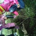 Мини-проект во второй младшей группе «Лес-наше богатство»