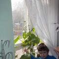 Проект «Огород на подоконнике»