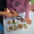 Экологический познавательно-исследовательский проект «Огород на подоконнике» с детьми подготовительной группы