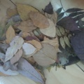 Осенняя аппликация «Листья в вазе»