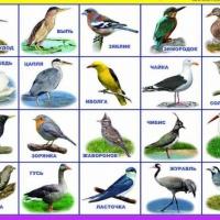 Конспект занятия по развитию речи на тему «Перелетные птицы». Подготовительная группа.
