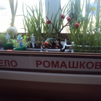 Фотоотчёт об огороде на подоконнике «Паровозик из Ромашково»