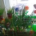 Огород на окне (фотоотчет)