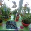Фотоотчет «Огородные фонарики»