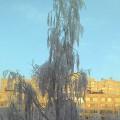 Сказочная зима в Санкт-Петербурге (фоторепортаж)