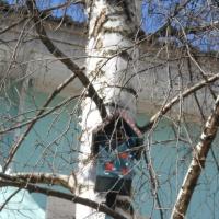 Фотоотчёт «Птицы на нашем участке»