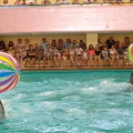 Фотозарисовка «Дельфинарий в Геленджике»