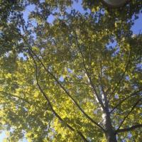 Сценарий осеннего утренника в средней группе «В осеннем лесу»