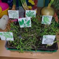 Фотоотчёт о мини-огороде «Витаминный огород» во второй младшей группе