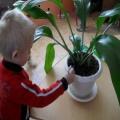 НОД по познавательному развитию в средней группе с использованием ИКТ по теме «Комнатные растения»