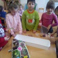 Конспект НОД для детей подготовительной к школе группы «Посадка лука»
