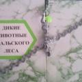 Лэпбук «Дикие животные Уральского леса»