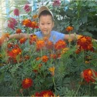 Консультация «Значение цветов в жизни человека»