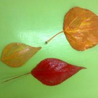 Конспект занятия по рисованию в нетрадиционной технике на тему: «Осенний лес» с детьми 5–6 лет
