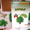 Конспект НОД по ознакомлению с окружающим миром «Деревья» для детей 5–7 лет