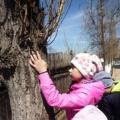 Тематическая весенняя прогулка «Рассматривание деревьев и кустарников на участке детского сада» с детьми 5–7 лет