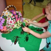 Конспект НОД по познавательному развитию «Насекомые» для старшего дошкольного возраста