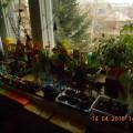 Проект «Огород на окне» в средней группе