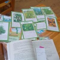 Конспект НООД «Деревья и кустарники нашего двора» в старшей группе