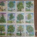 Дидактическая игра «Узнай дерево по листочку» или «Найди пару»