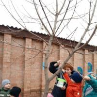 Фотоотчет о проведенной акции «Покормите птиц зимой» . Птичья столовая на нашем участке