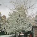 Фотозарисовка «Снегопад»