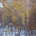 Первый снег в Москве. Фотозарисовка