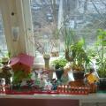 Огород на подоконнике— фотоотчет