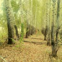 «Осень в объективе». Фотозарисовка одного выходного дня