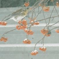Продолжение фотозарисовки «Рябина в гости пригласила»