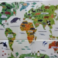 Фотоотчет о занятиях по знакомству детей с животными разных стран