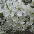 Фоторепортаж «Весна идет, весне— дорогу!»