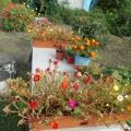 Фоторепортаж «Мой сад и огород»