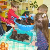 Фотоотчет о занятиях по экологическому воспитанию в детском саду «Мини-огород на окне»