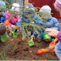 Посадка елки на участке детского сада