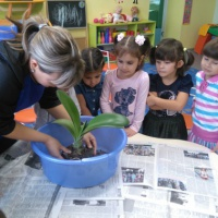 Конспект занятия «Пересадка комнатных растений» в средней группе