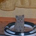 1 марта— Всемирный день кошек (фотозарисовка)