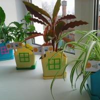 Фотоотчет «Участие родителей в озеленении группы»