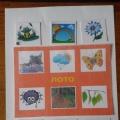 Дидактическая игра по экологии: «Ассоциации-лото» для детей дошкольного возраста