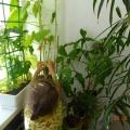 Инновационный проект «Огород на окне»