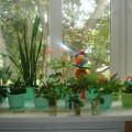 Проект «Огород на окне»