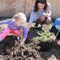Экологическое воспитание (посадка деревьев)