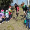 Весенний праздник «Эколята— молодые защитники природы. День деревьев» в рамках экологического проекта «Весна»