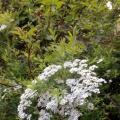 Фотоотчет «Наблюдения за цветением кустарников»